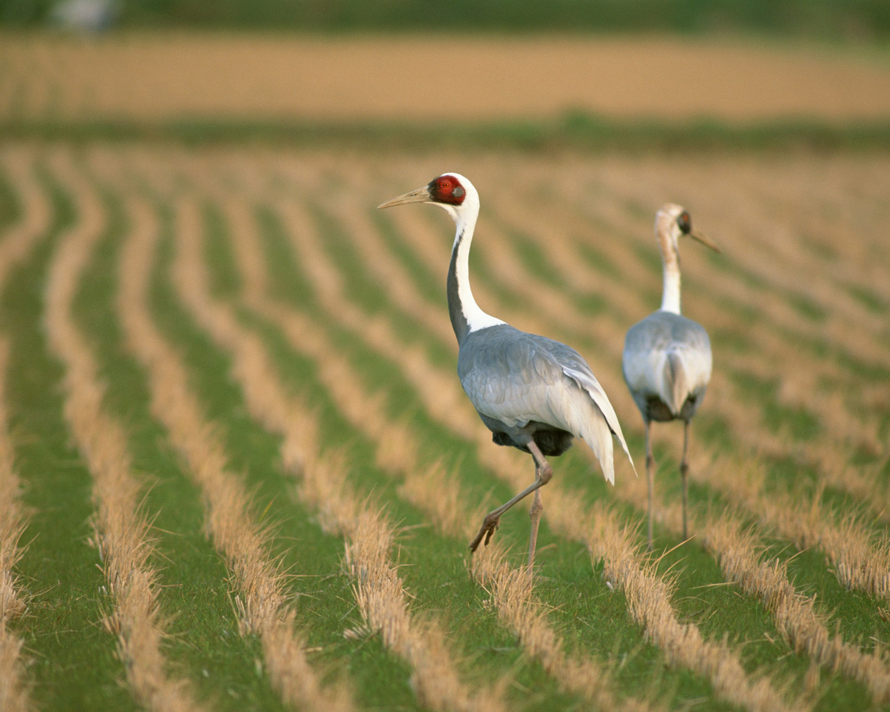 High-resolution pictures of birds 7624
