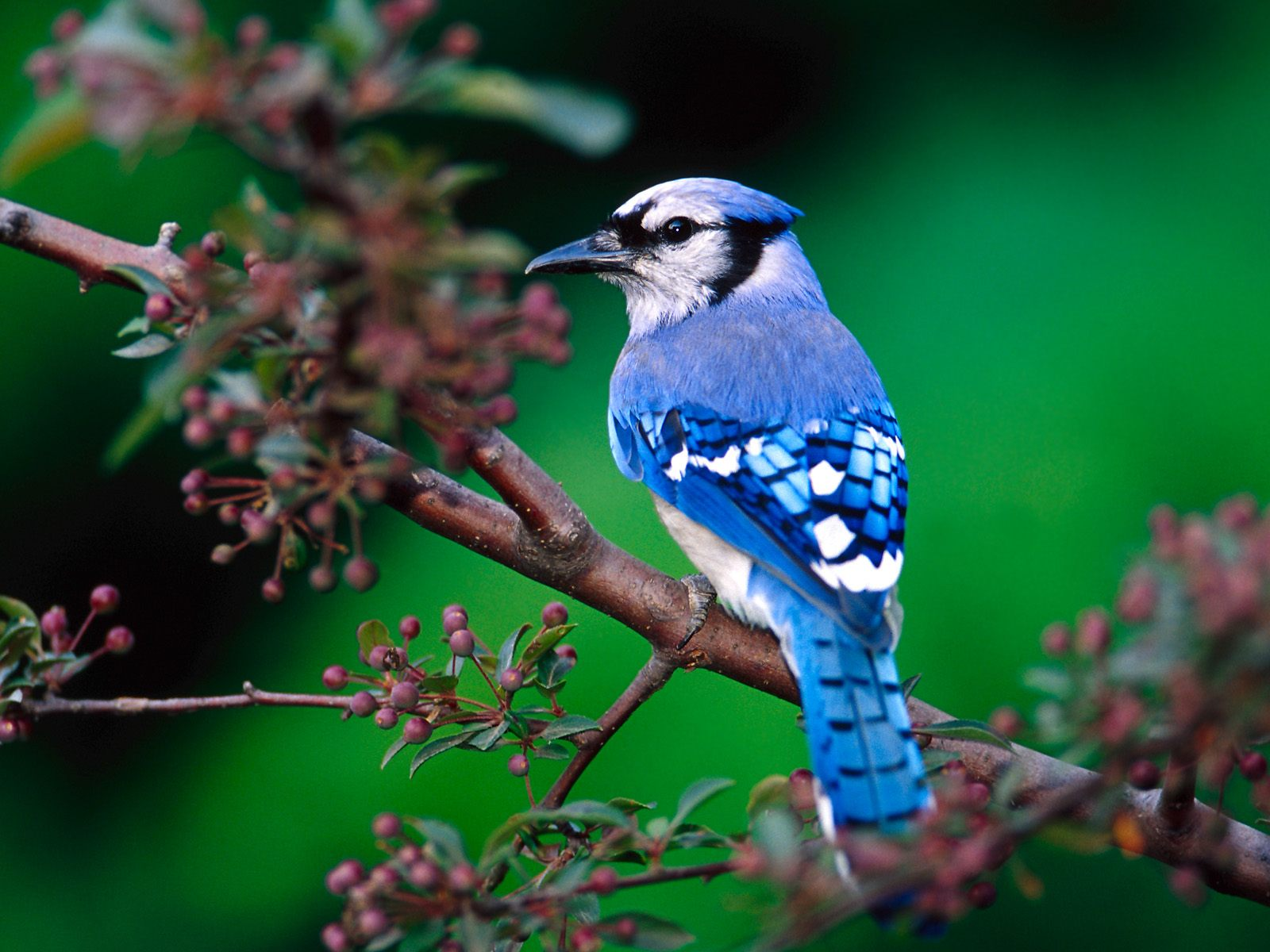 High-resolution pictures of birds 864