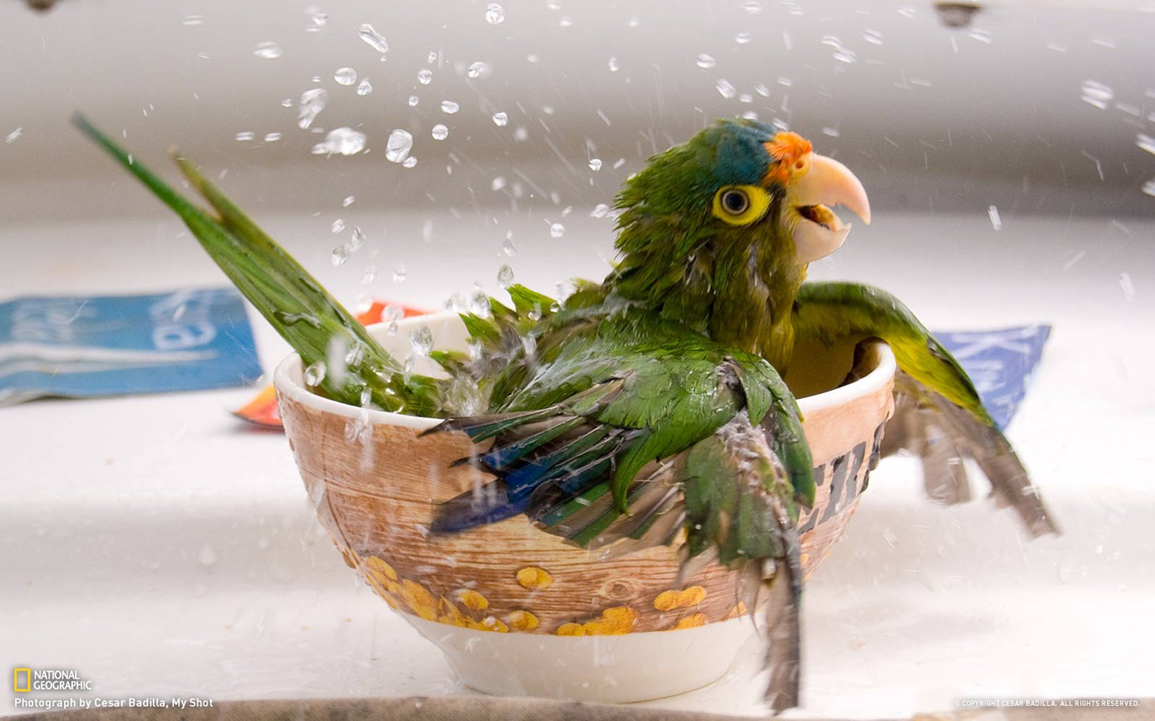 Parrot Wallpaper bath 15860