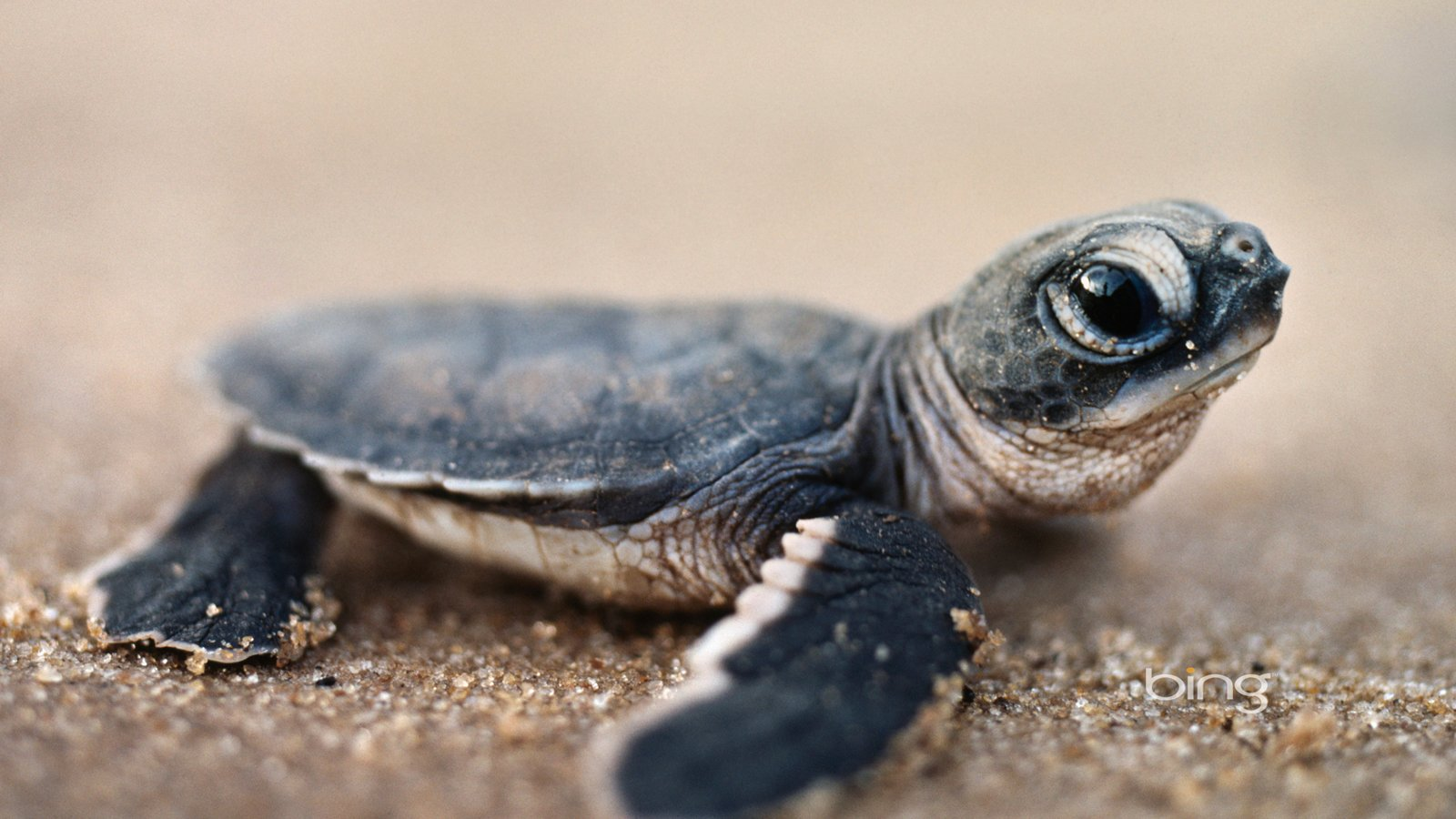 Turtles Wallpapers 18578