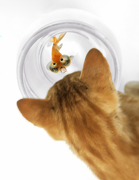 Cat and Fish Pictures 18914