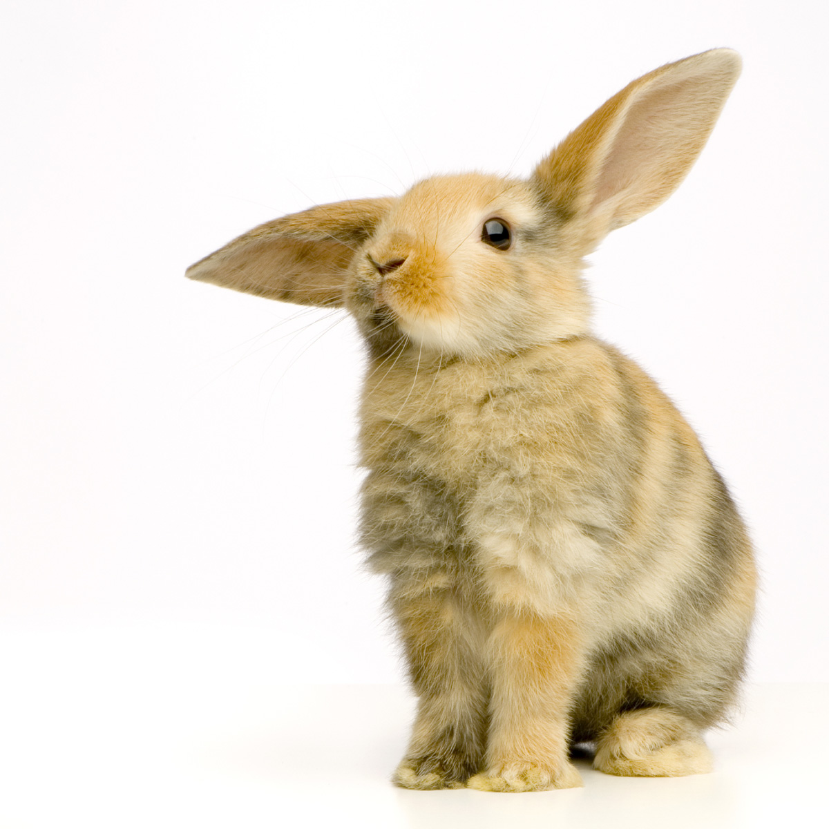 Cute rabbit 20402
