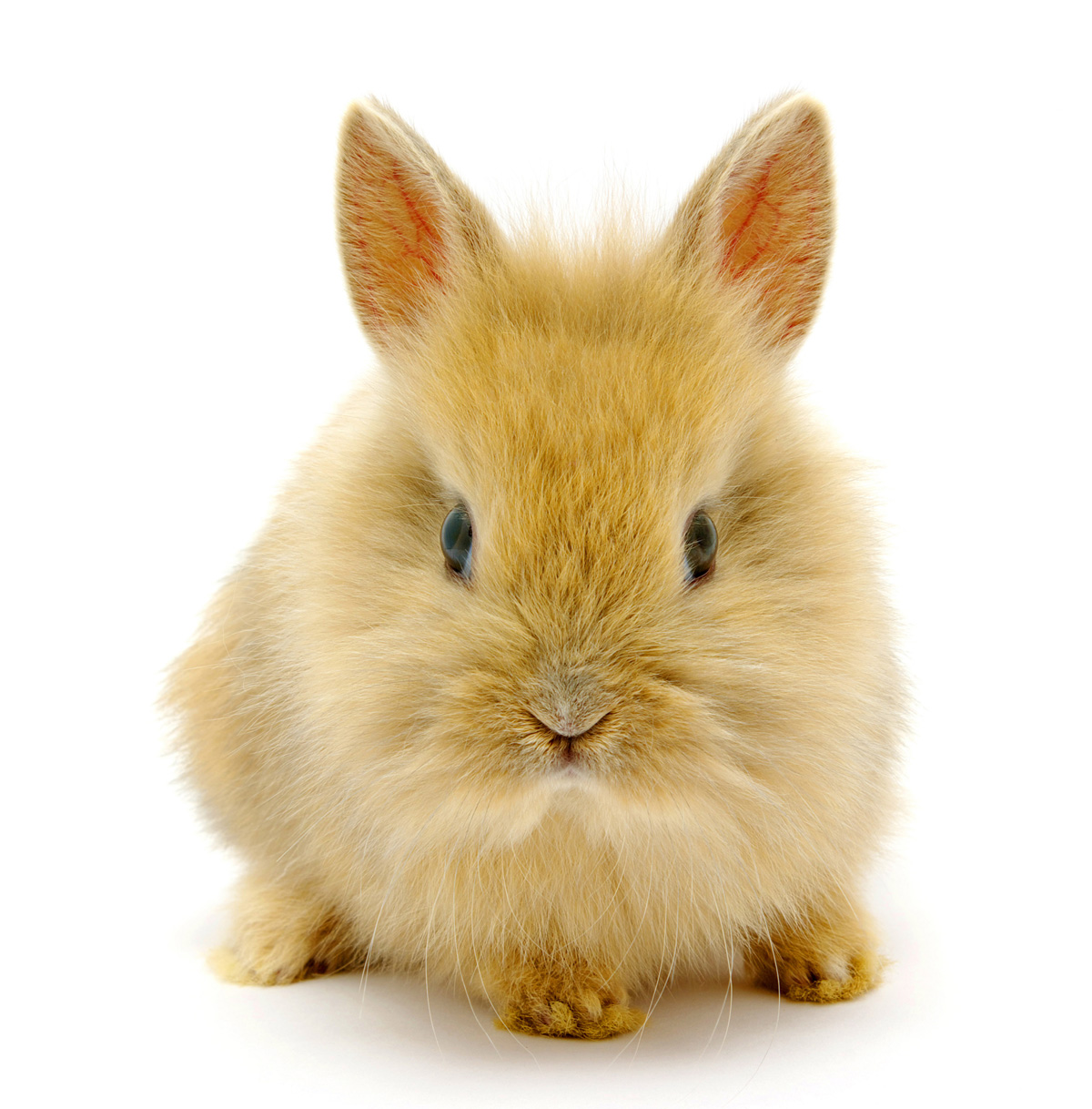 Cute little bunny 20973