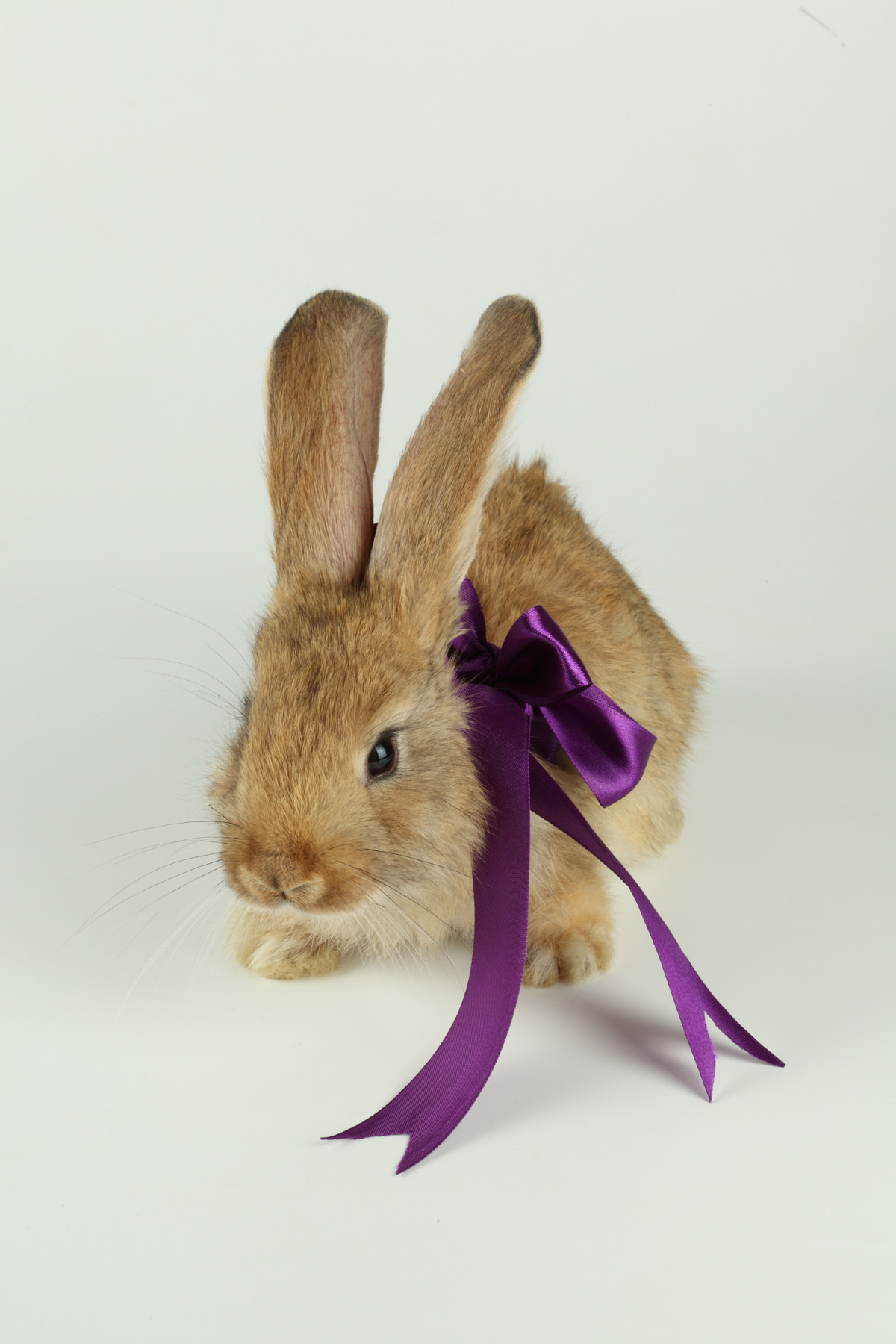 Cute rabbit with Ribbon 21010