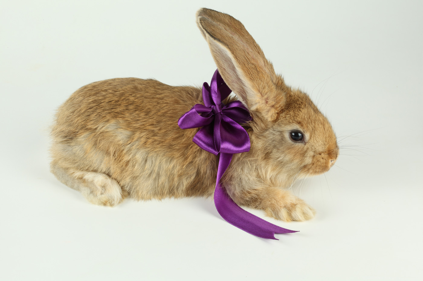 Cute rabbit with Ribbon 21047