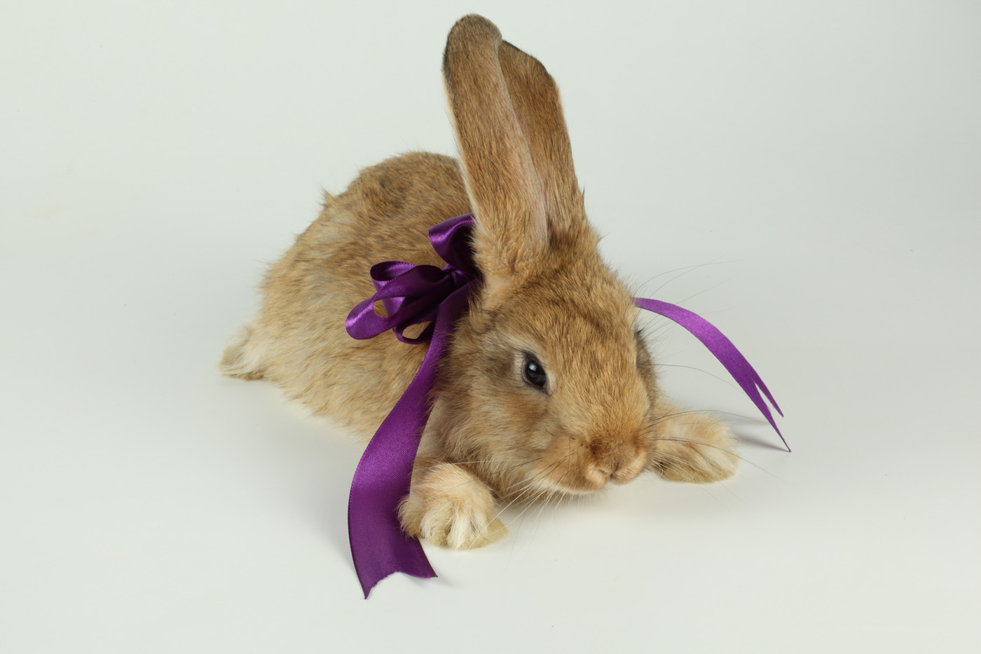 Cute rabbit with Ribbon 21084