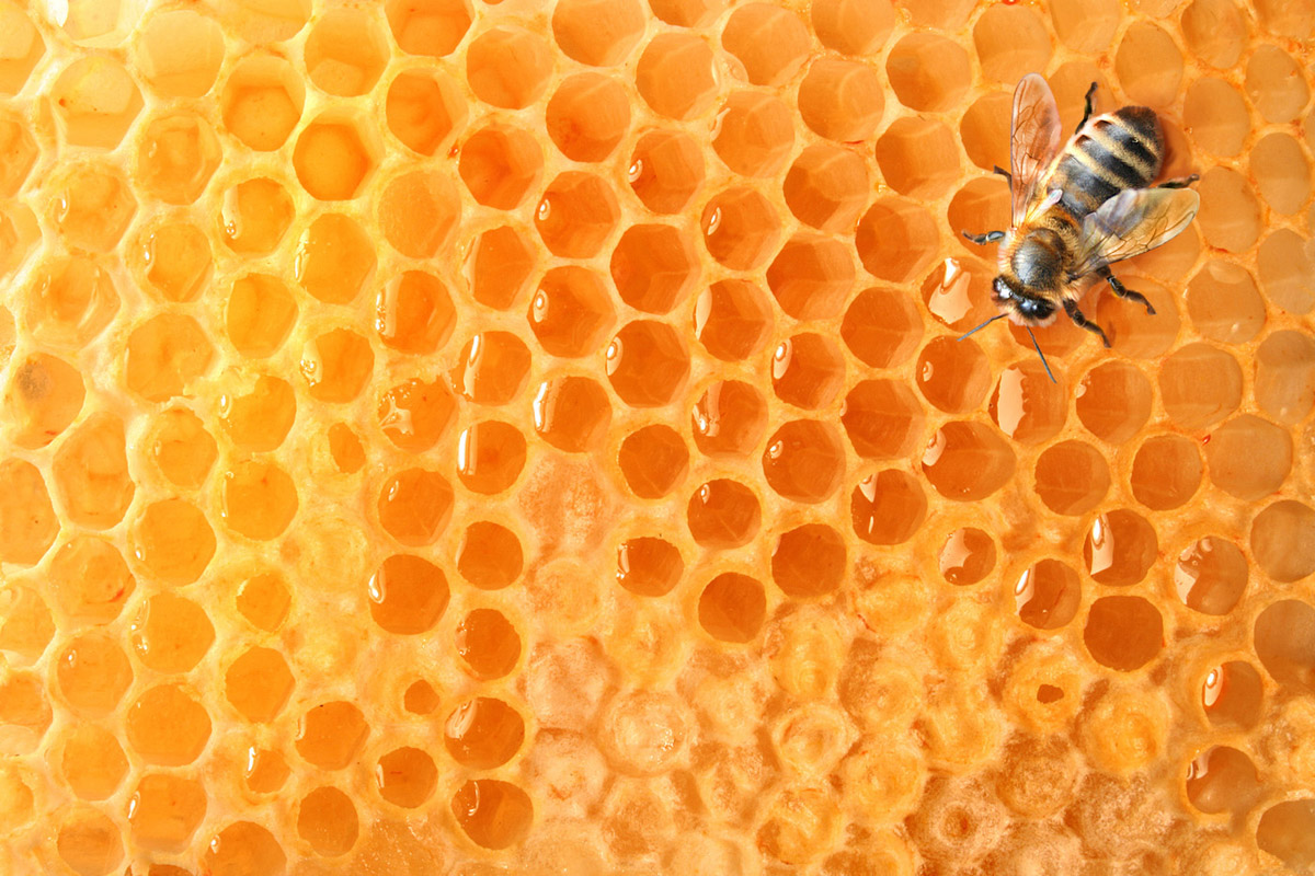 Bees and honeycomb 21428