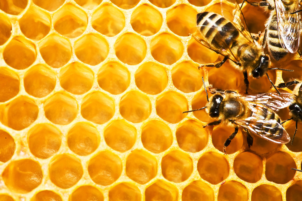 Bees and honeycomb 21462