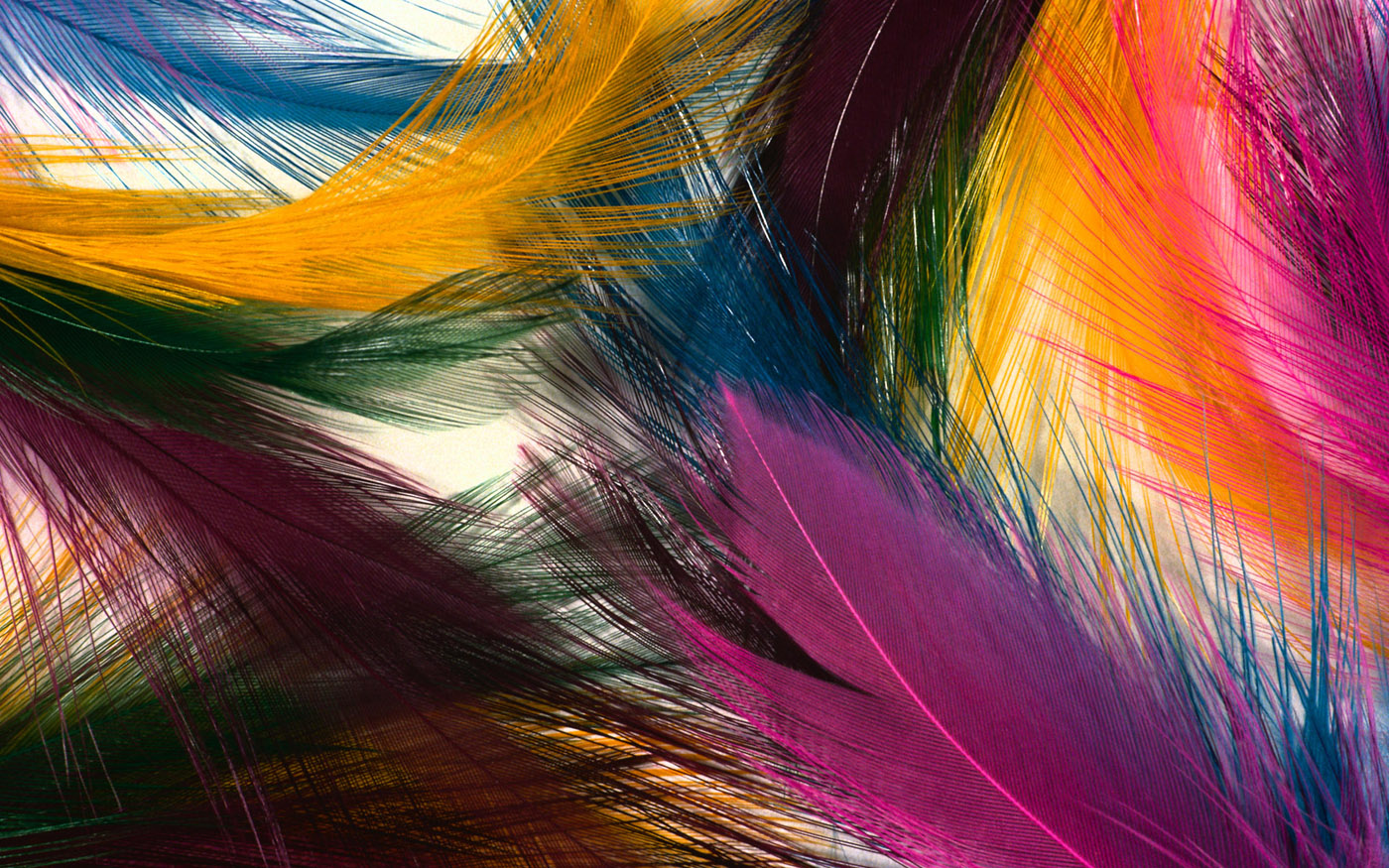 Feather wings close-up 29168
