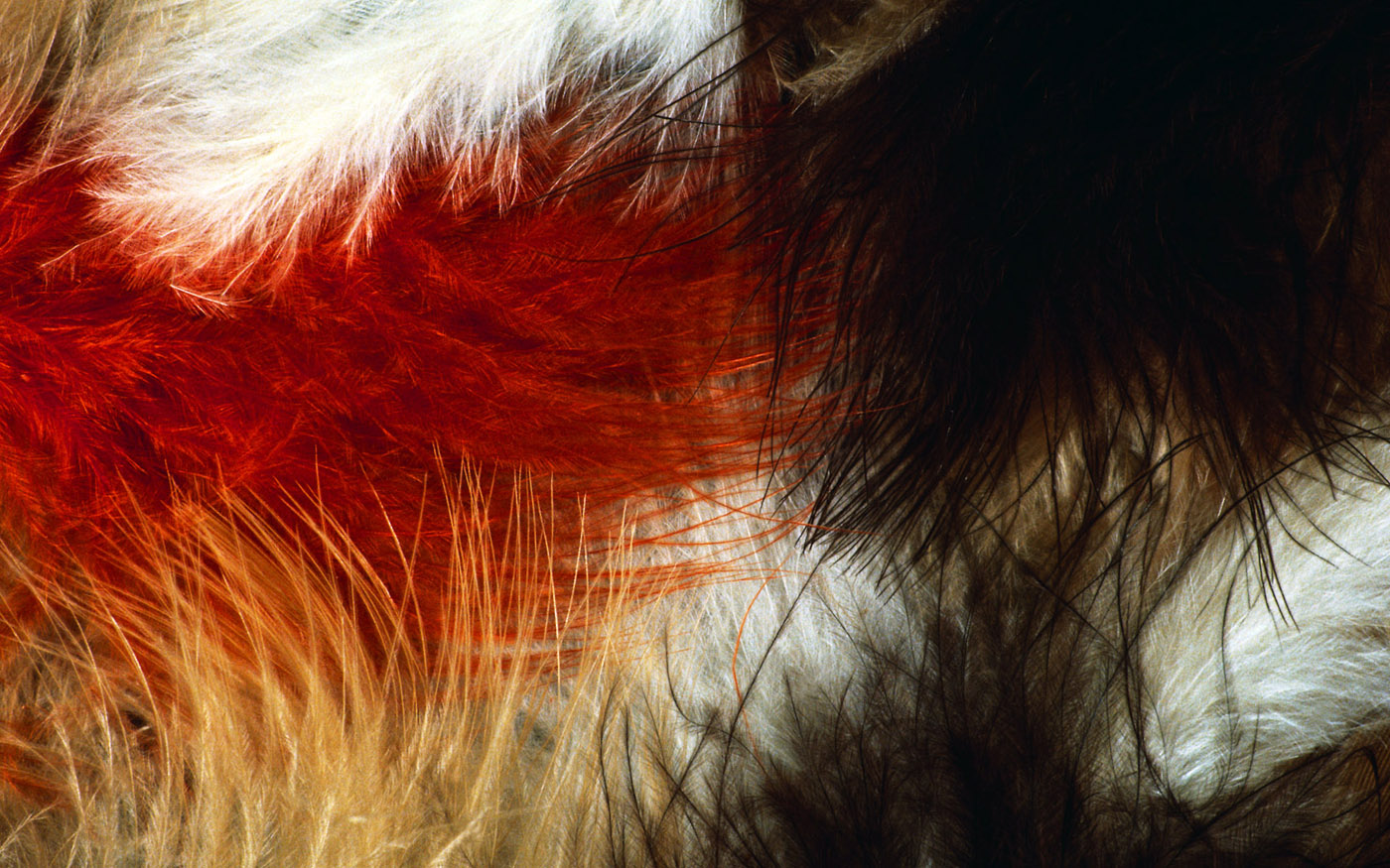 Feather wings close-up 29205