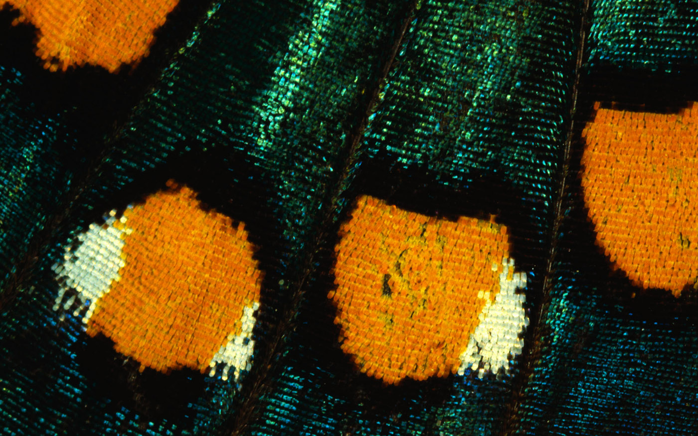 Feather wings close-up 29361