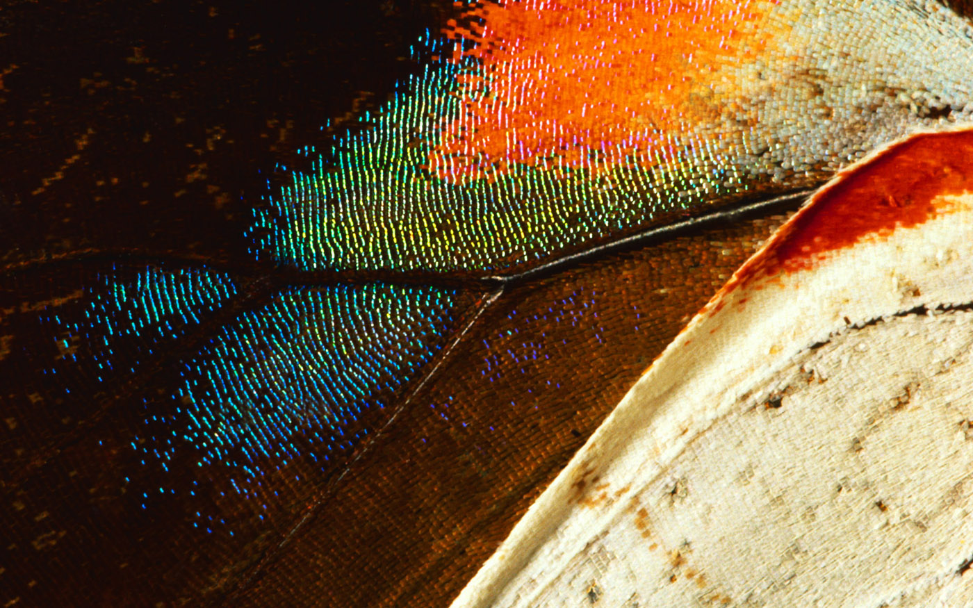 Feather wings close-up 29387