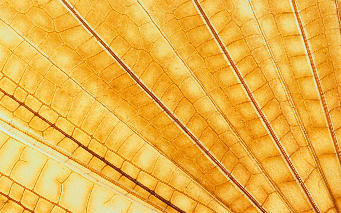 Feather wings close-up 29505