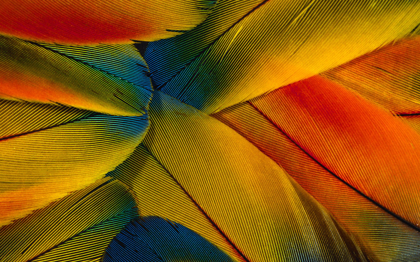 Feather wings close-up 29546