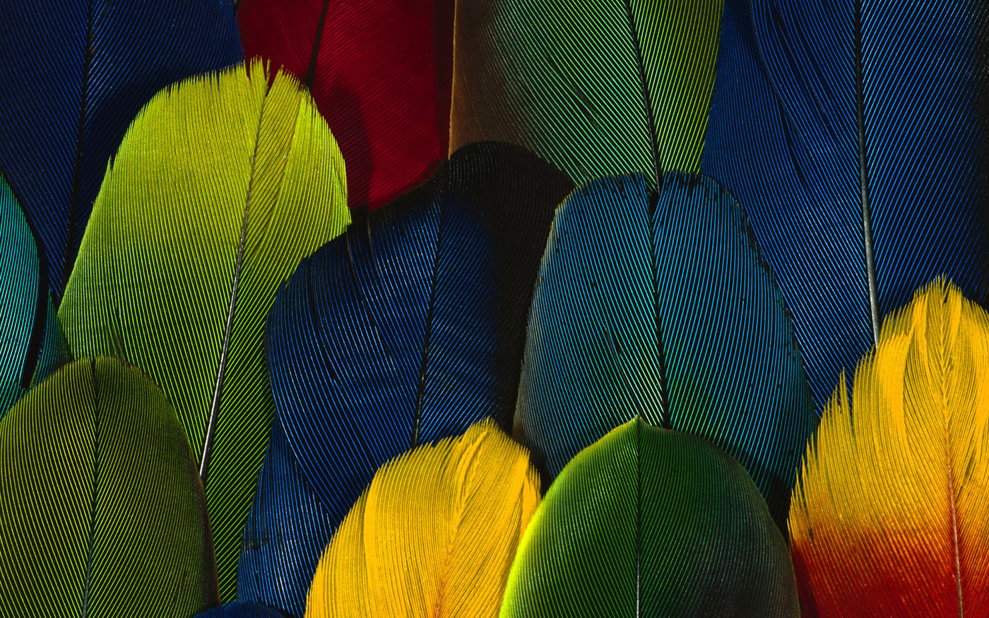 Feather wings close-up 29556