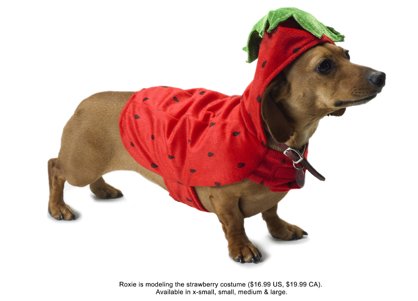 Strawberry loaded dog 10747