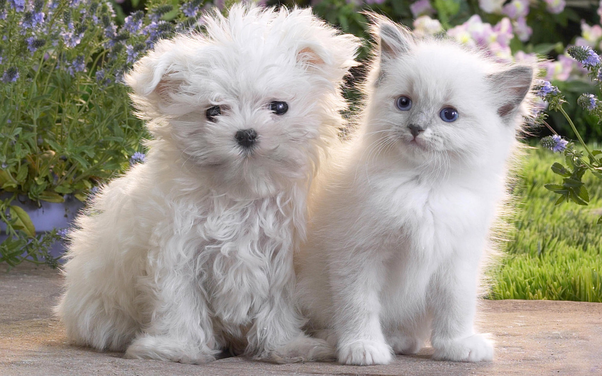Widescreen puppy pictures 7626