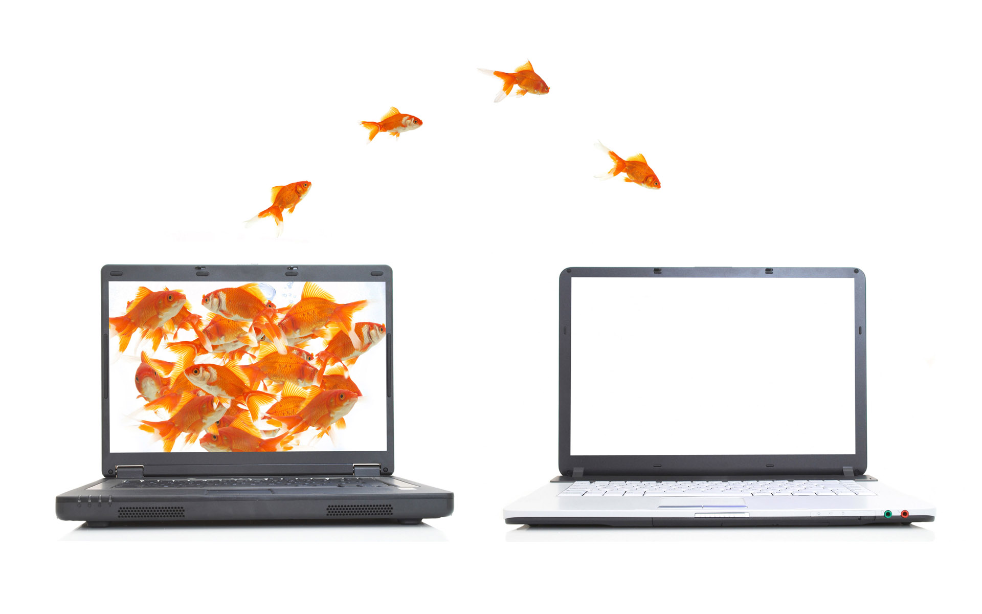 Jumping goldfish 169