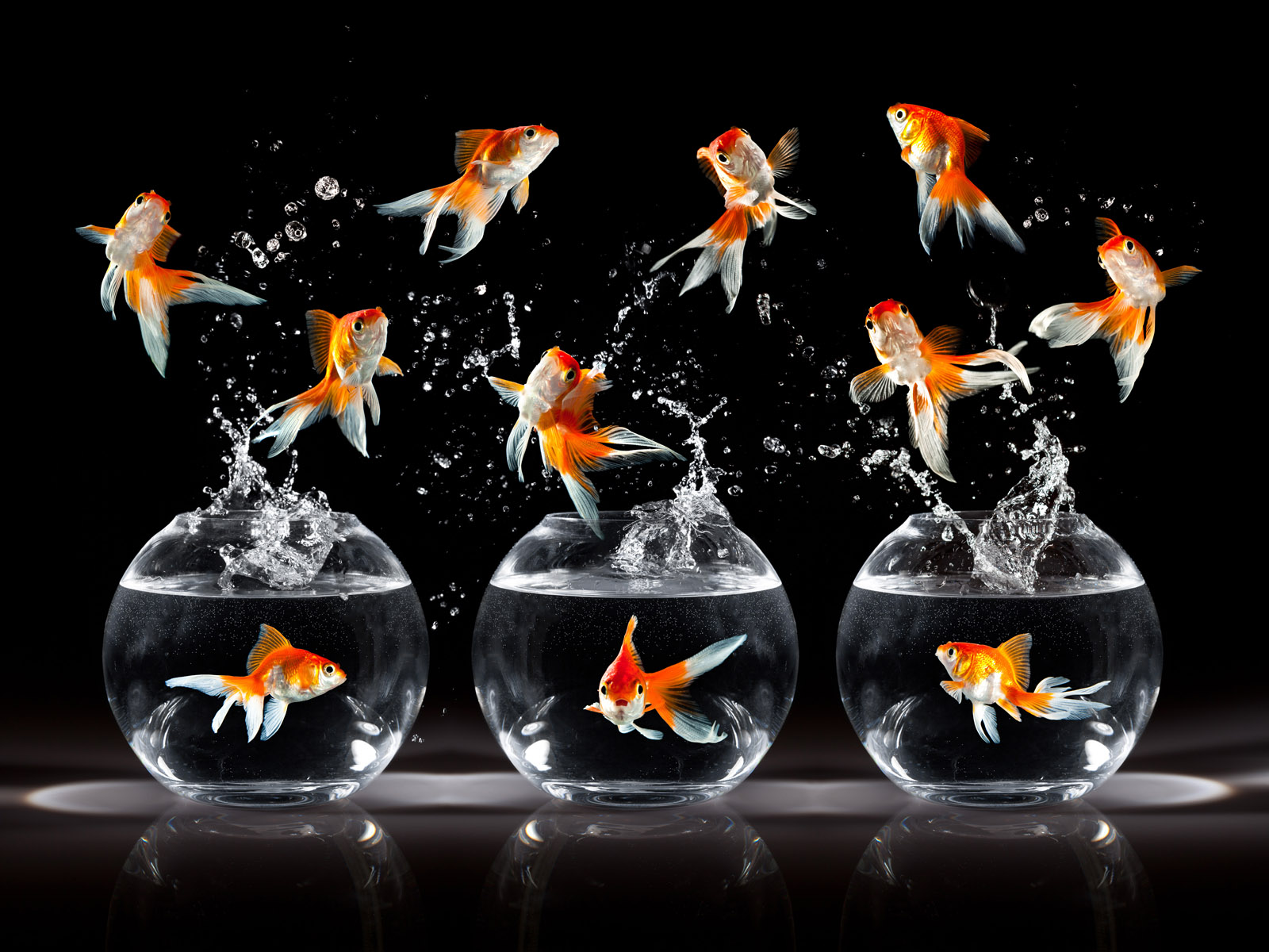 Jumping goldfish 4858