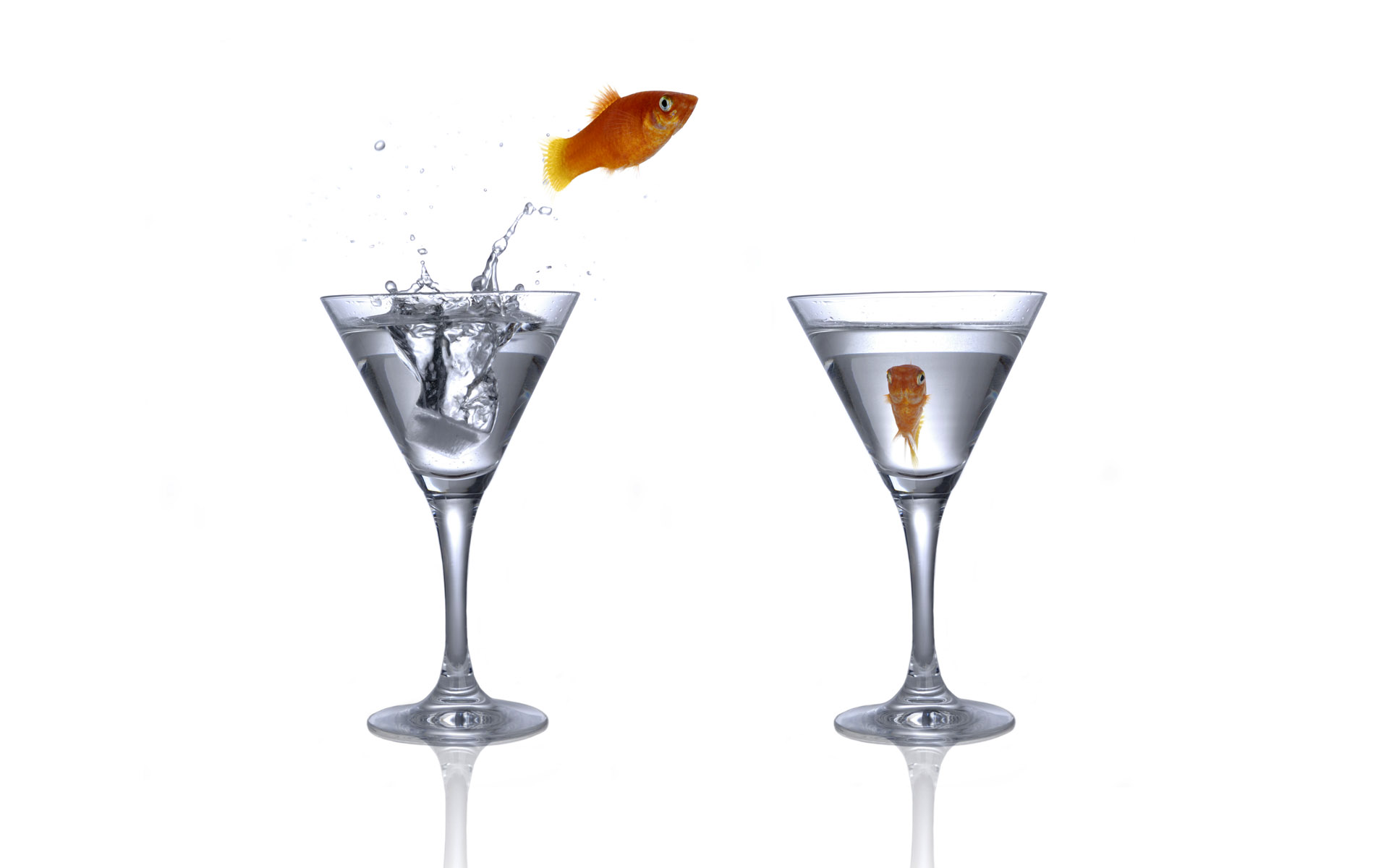 Jumping goldfish 694