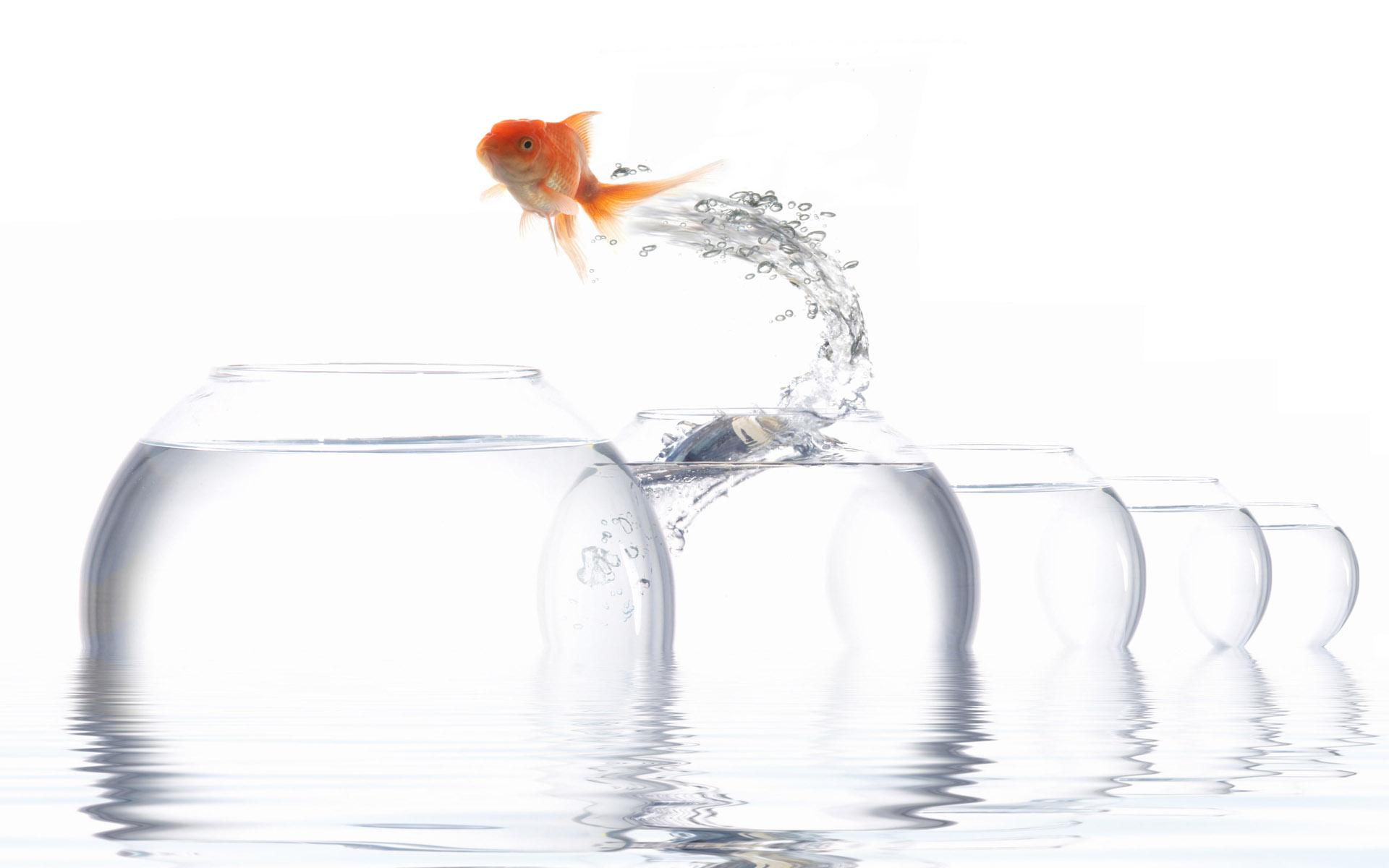 Jumping goldfish 869