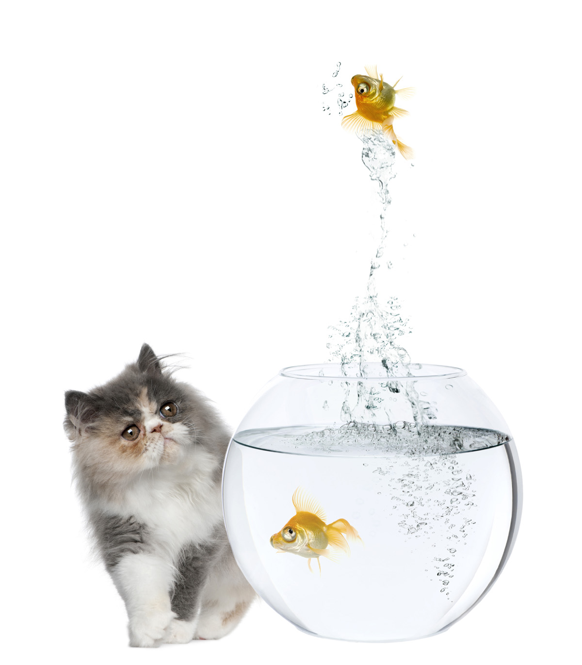 Cat and goldfish 3685