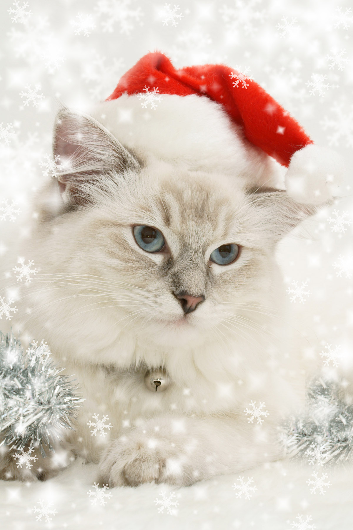 Christmas hats and cats 4128