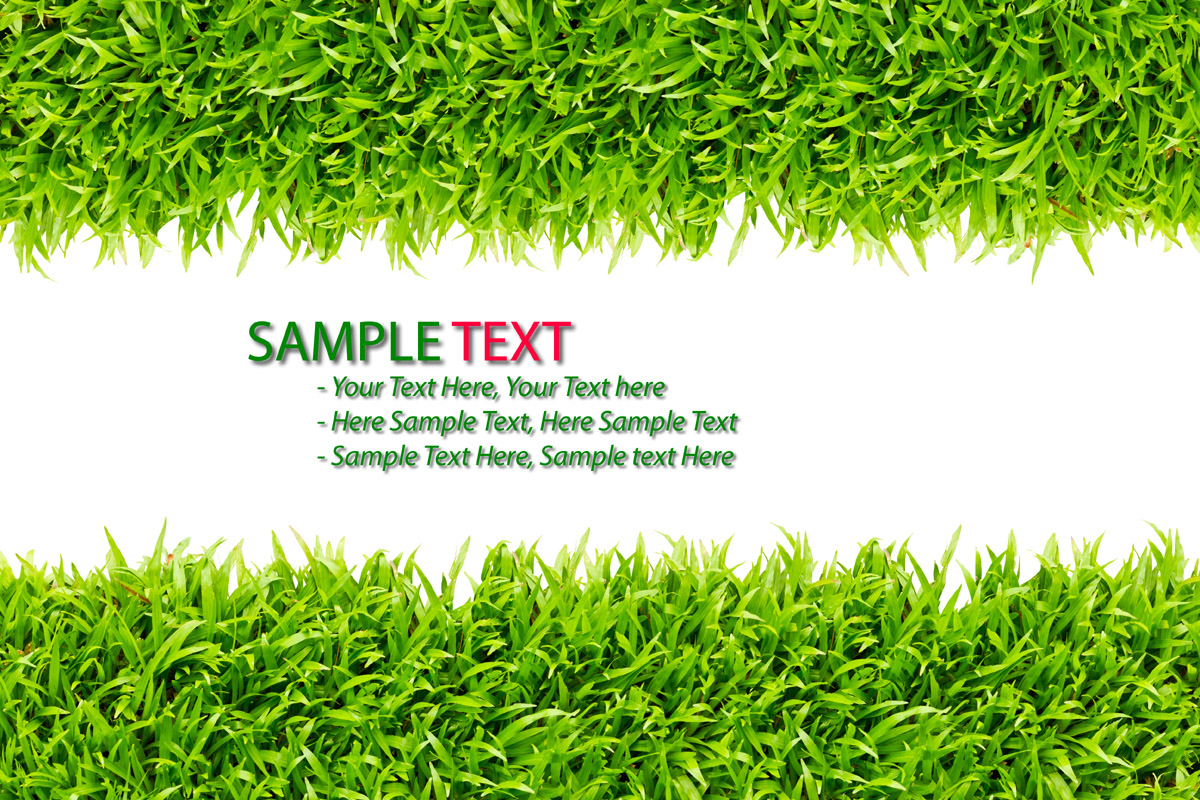 Green grass background 28082