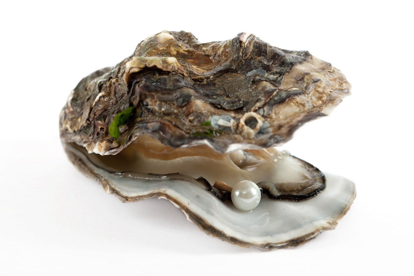 Pearl and Shell 14476