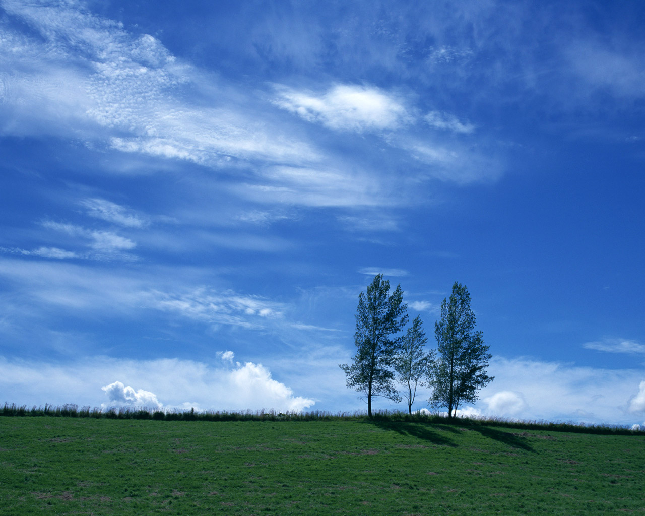 Blue and white wallpaper 5038