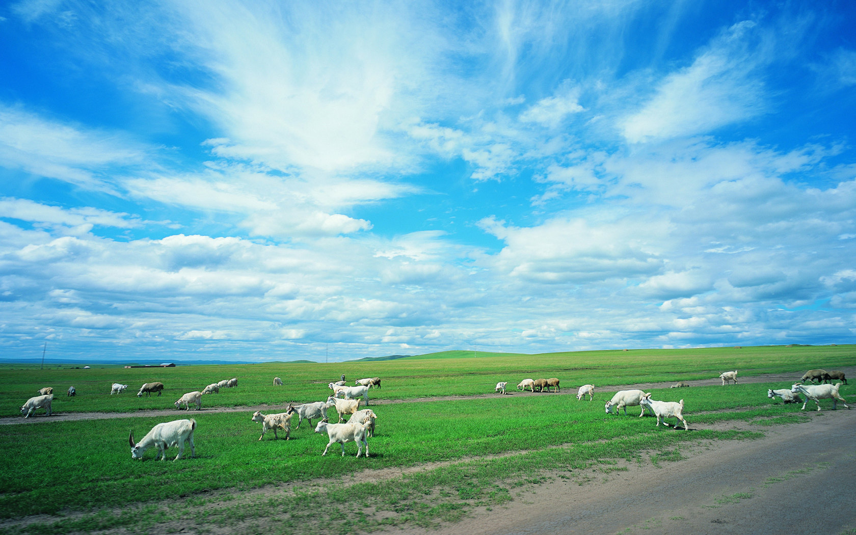 Pasture scenery of vast grassland 23003