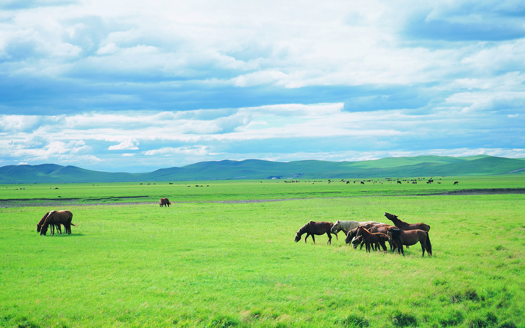Pasture scenery of vast grassland 23029
