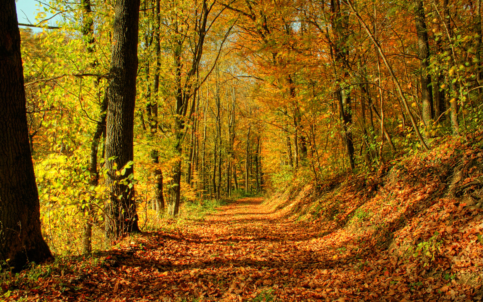 Forest Trail Wallpaper 23434