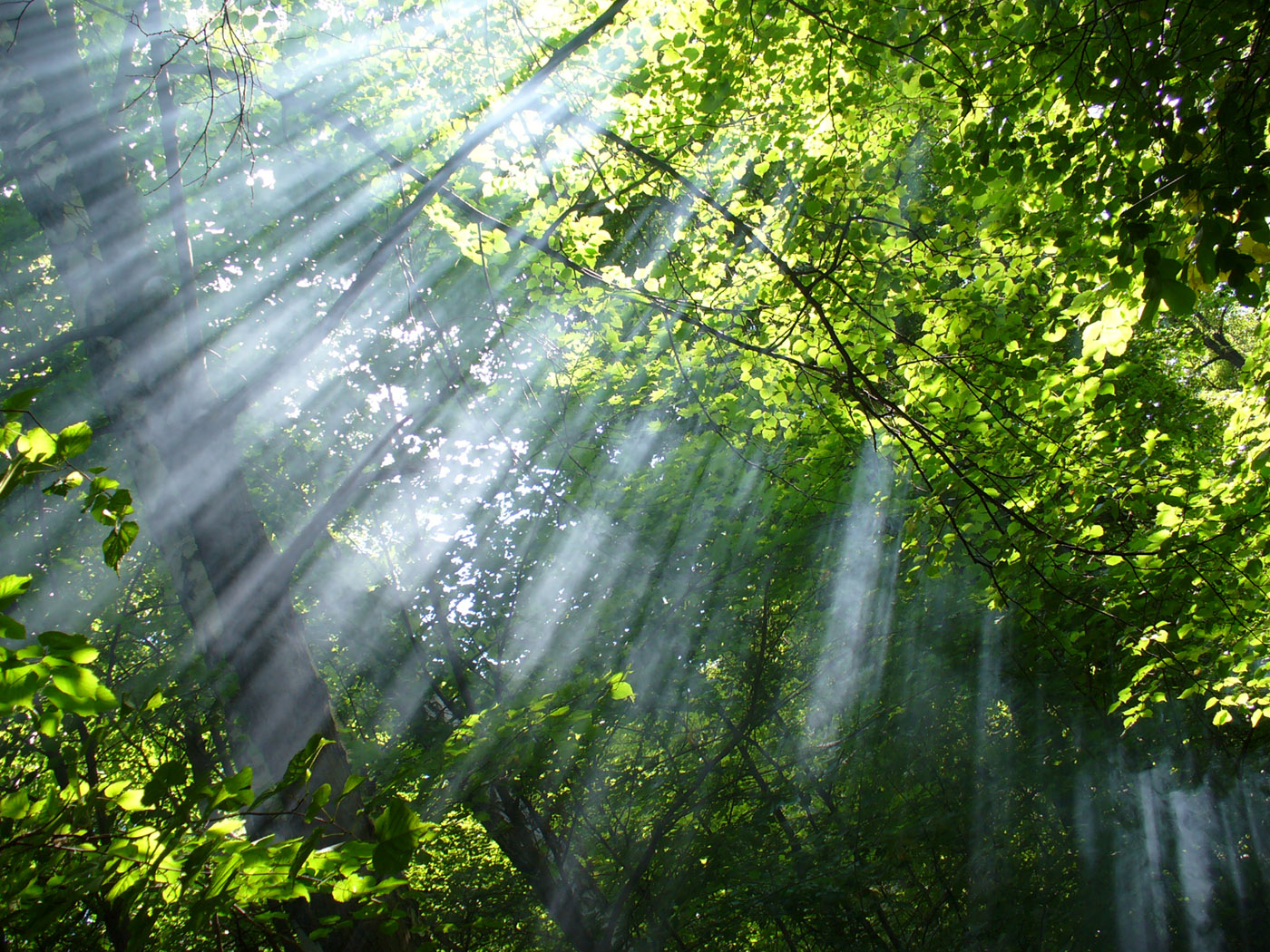 Sun rays through the woods 23597