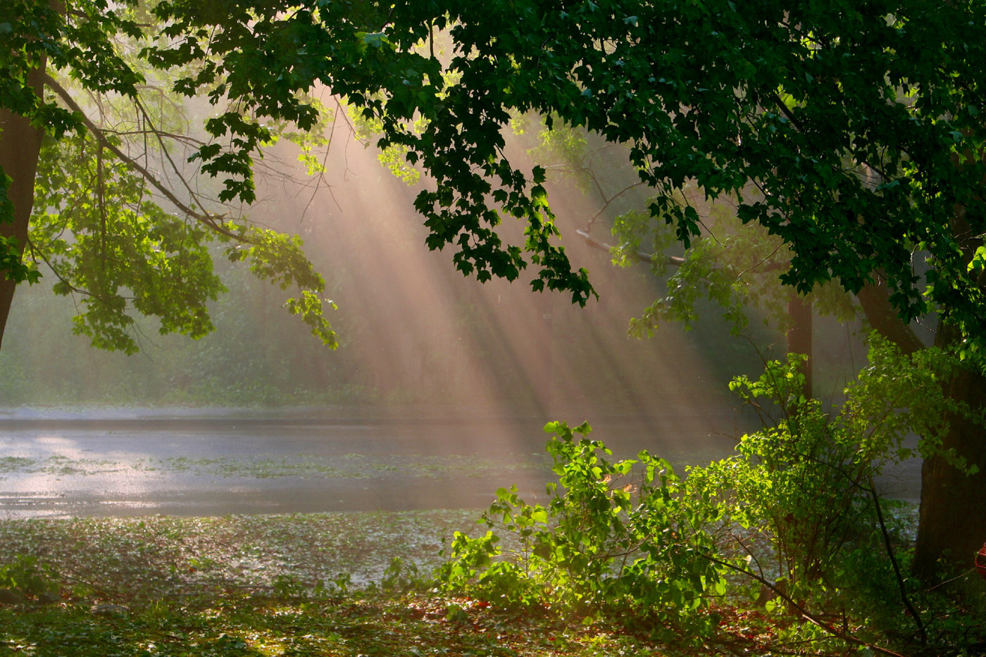 Sun rays through the woods 23666