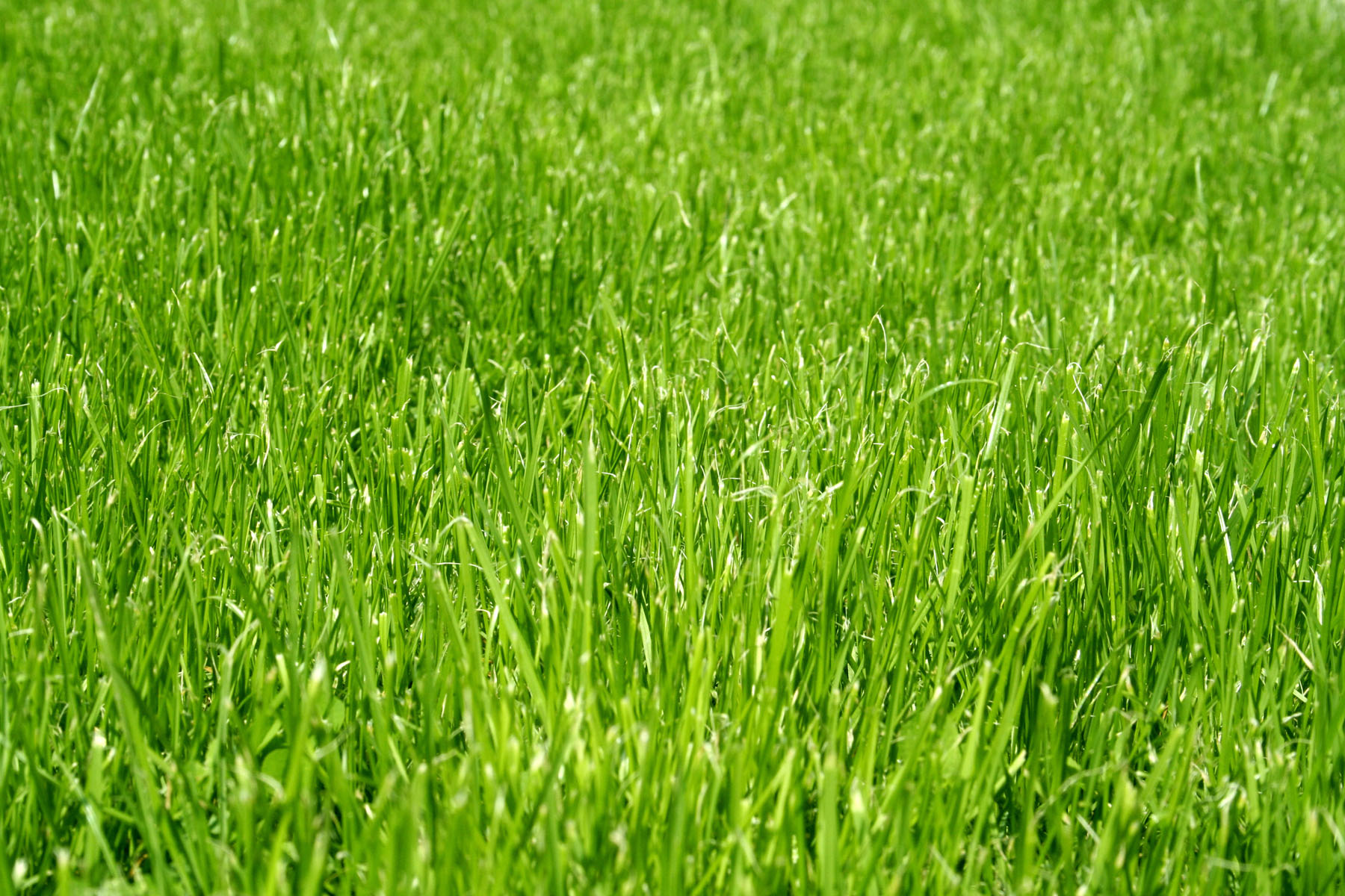 Close-up green space and grass 6687