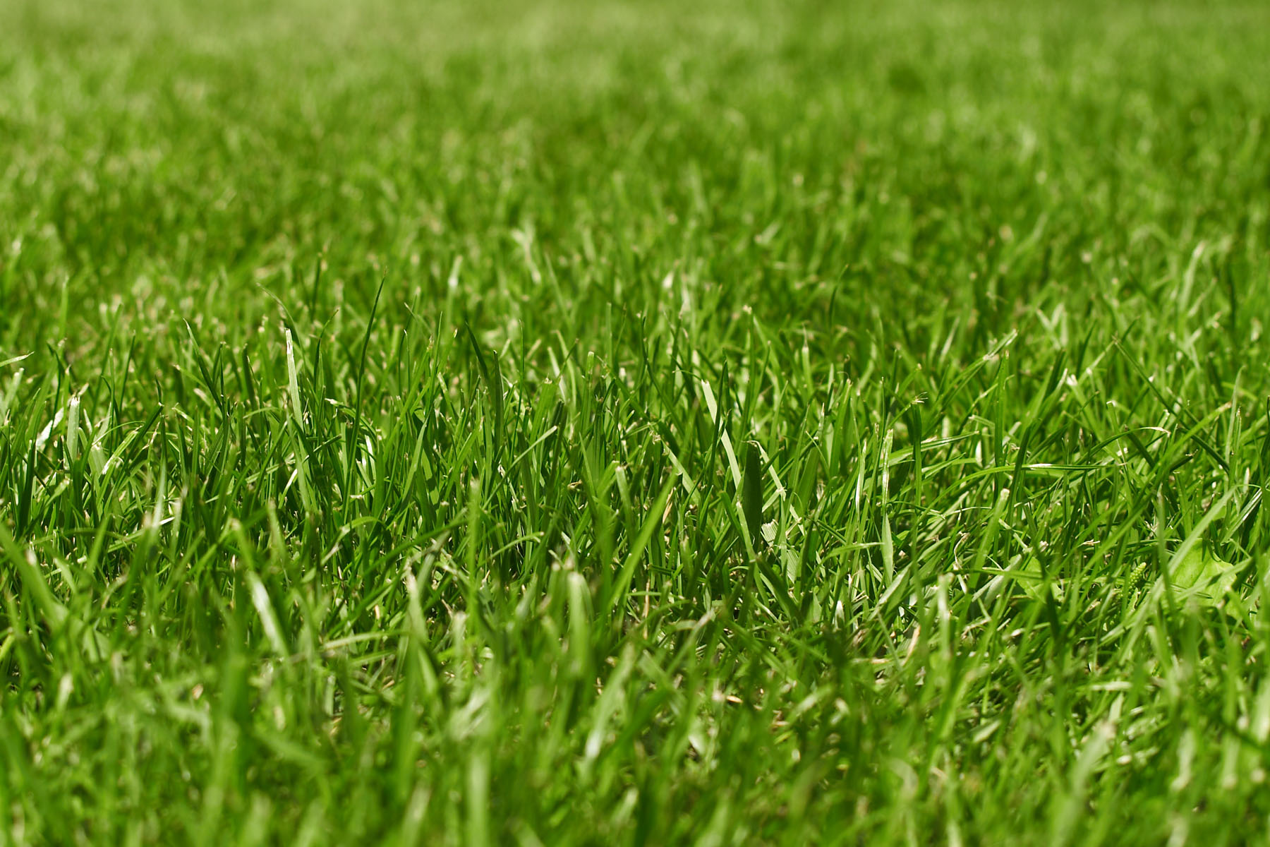 Close-up green space and grass 6812