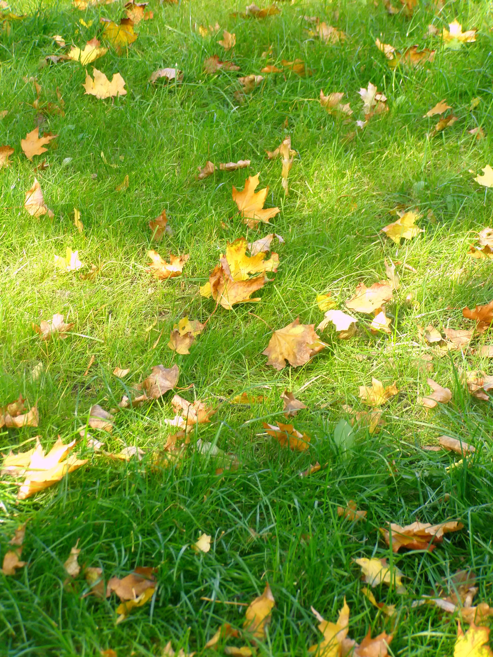 Close-up leaves and grass 6934