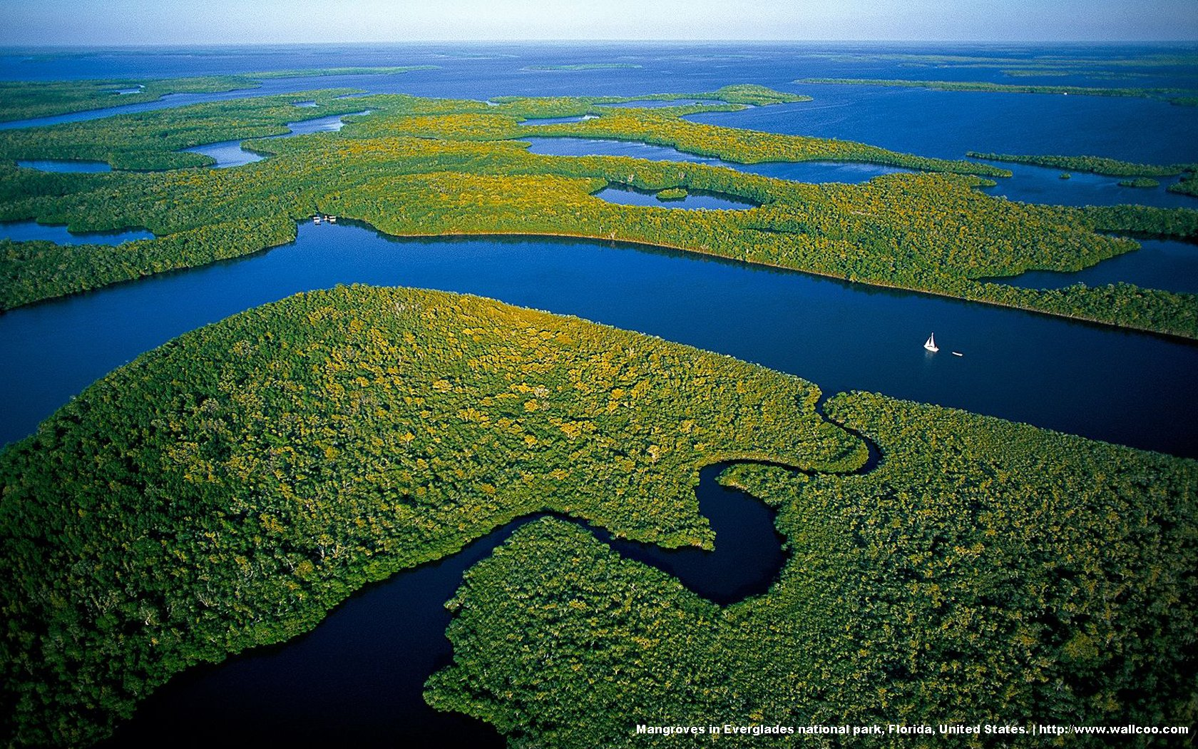 Everglades National Park's mangrove forests 19913