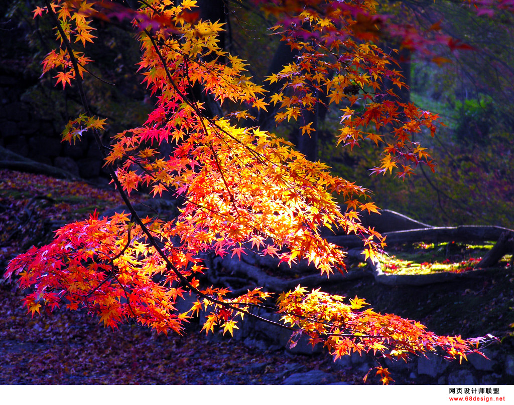 Autumn Theme 5742