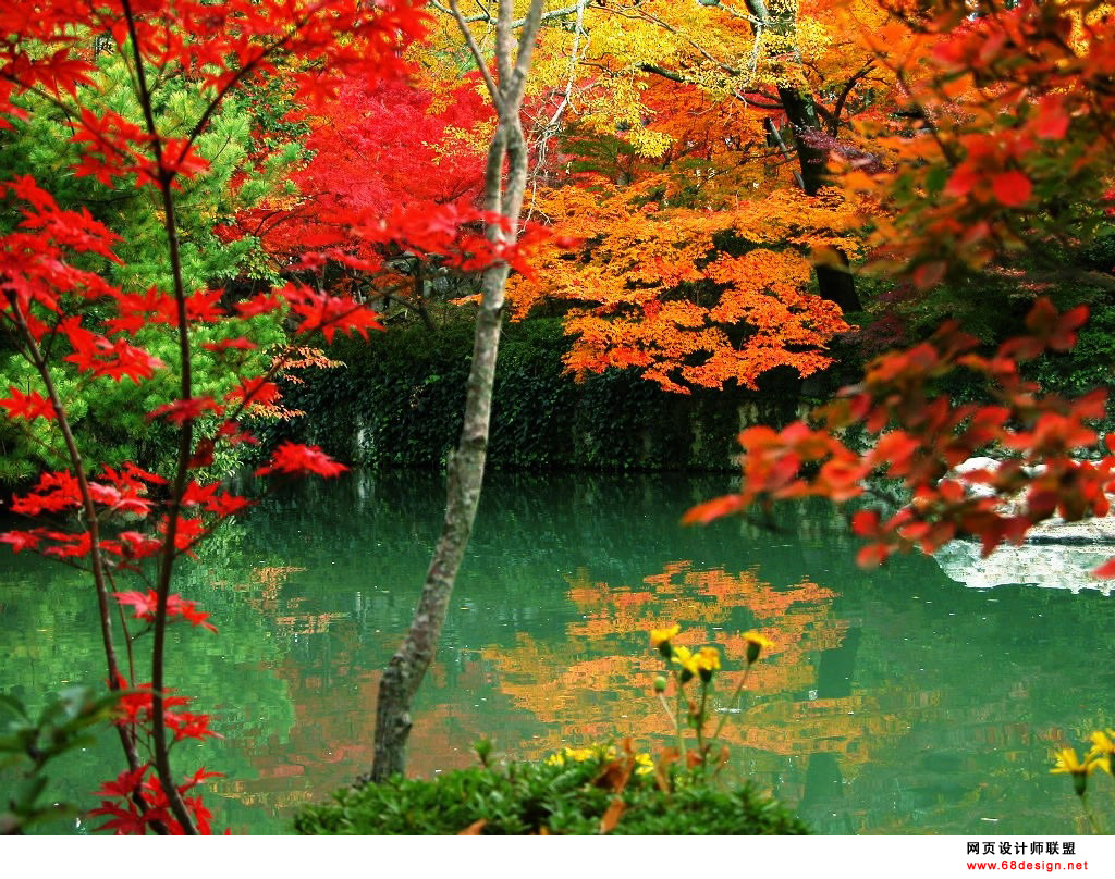 Autumn Theme 6558