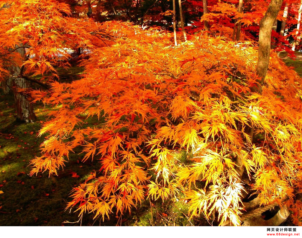 Autumn Theme 9100