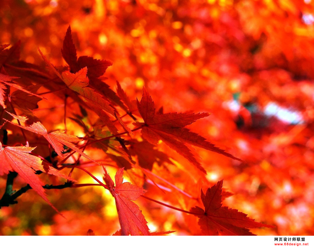 Autumn Theme 9848