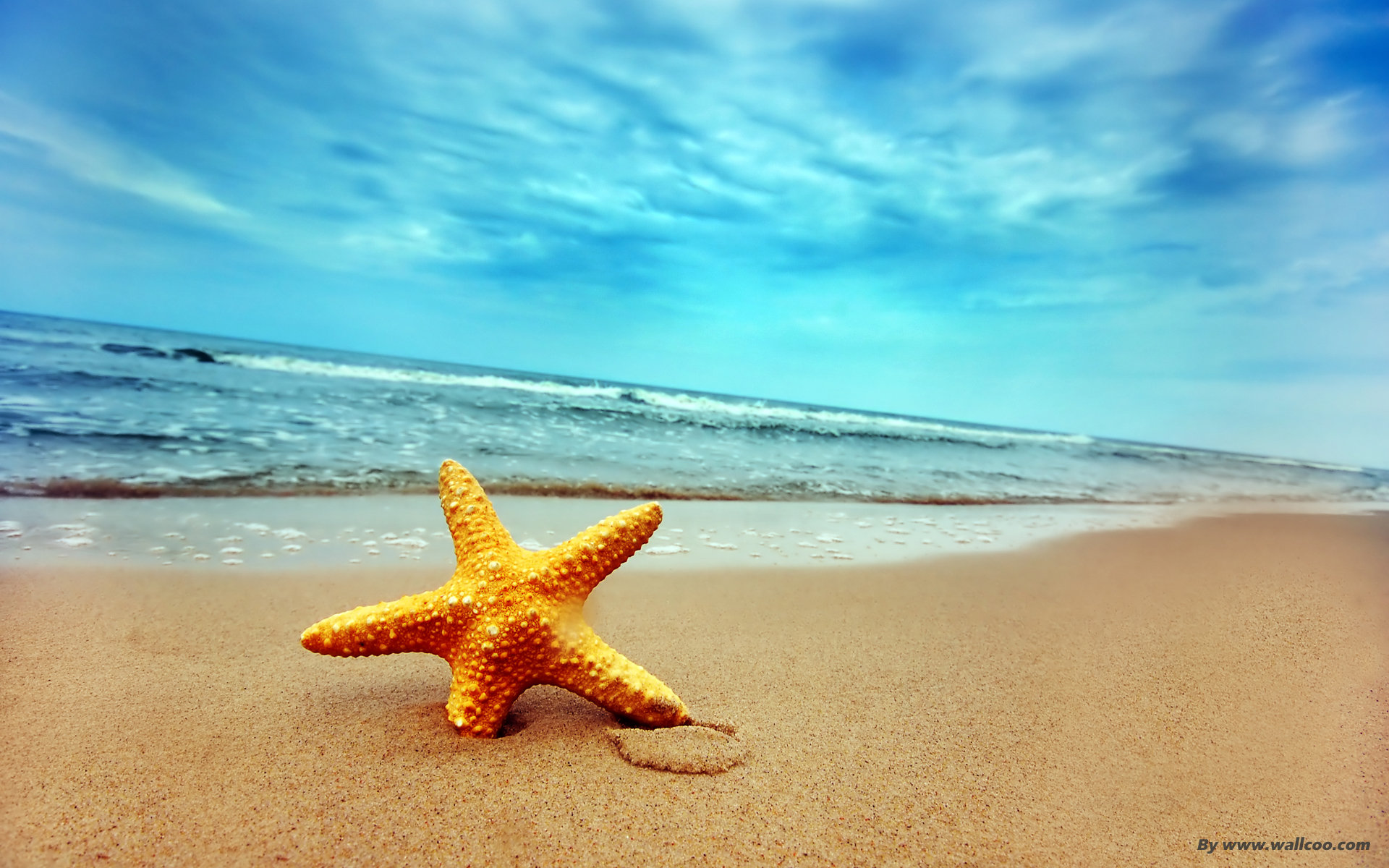 Starfish on the beach 17258