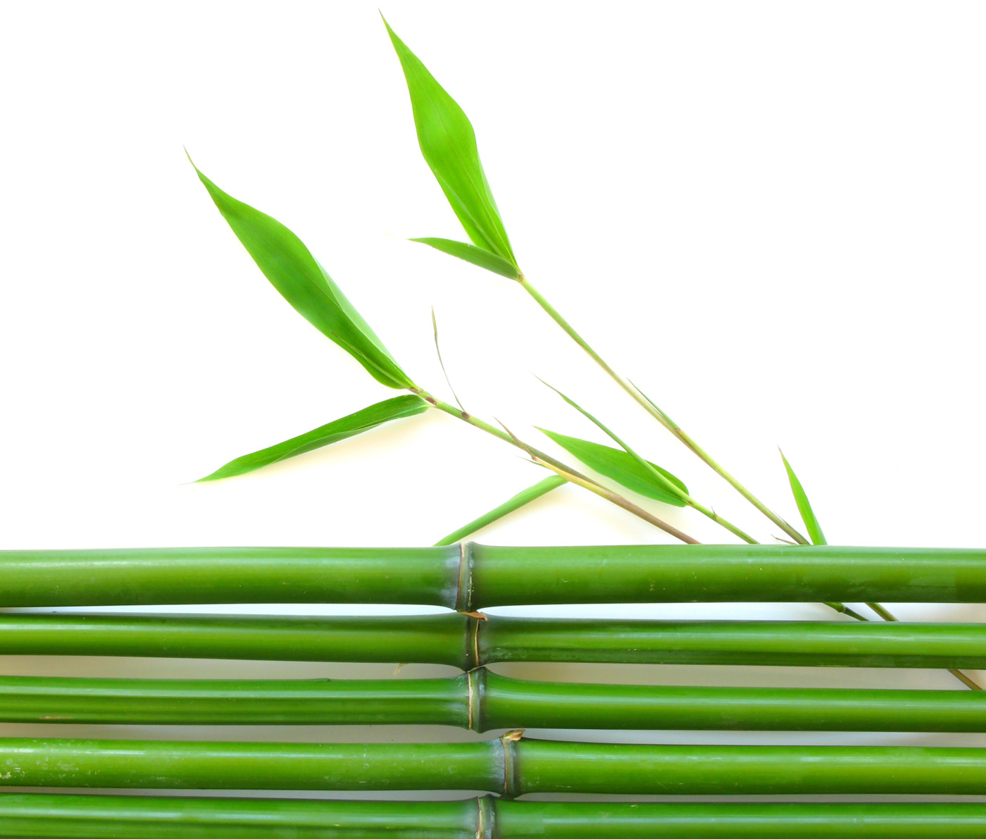 Bamboo leaves and bamboo 29159