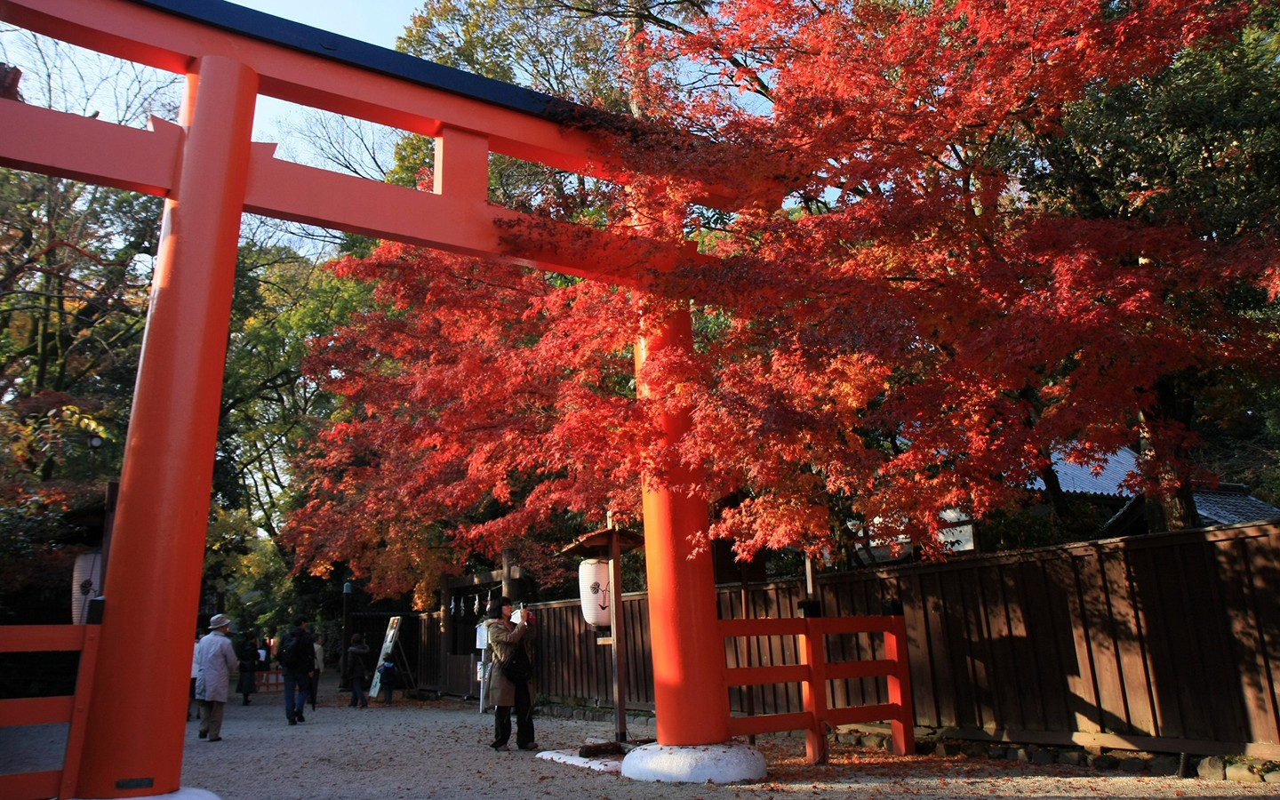 Red leaves against the background of Torii 30362