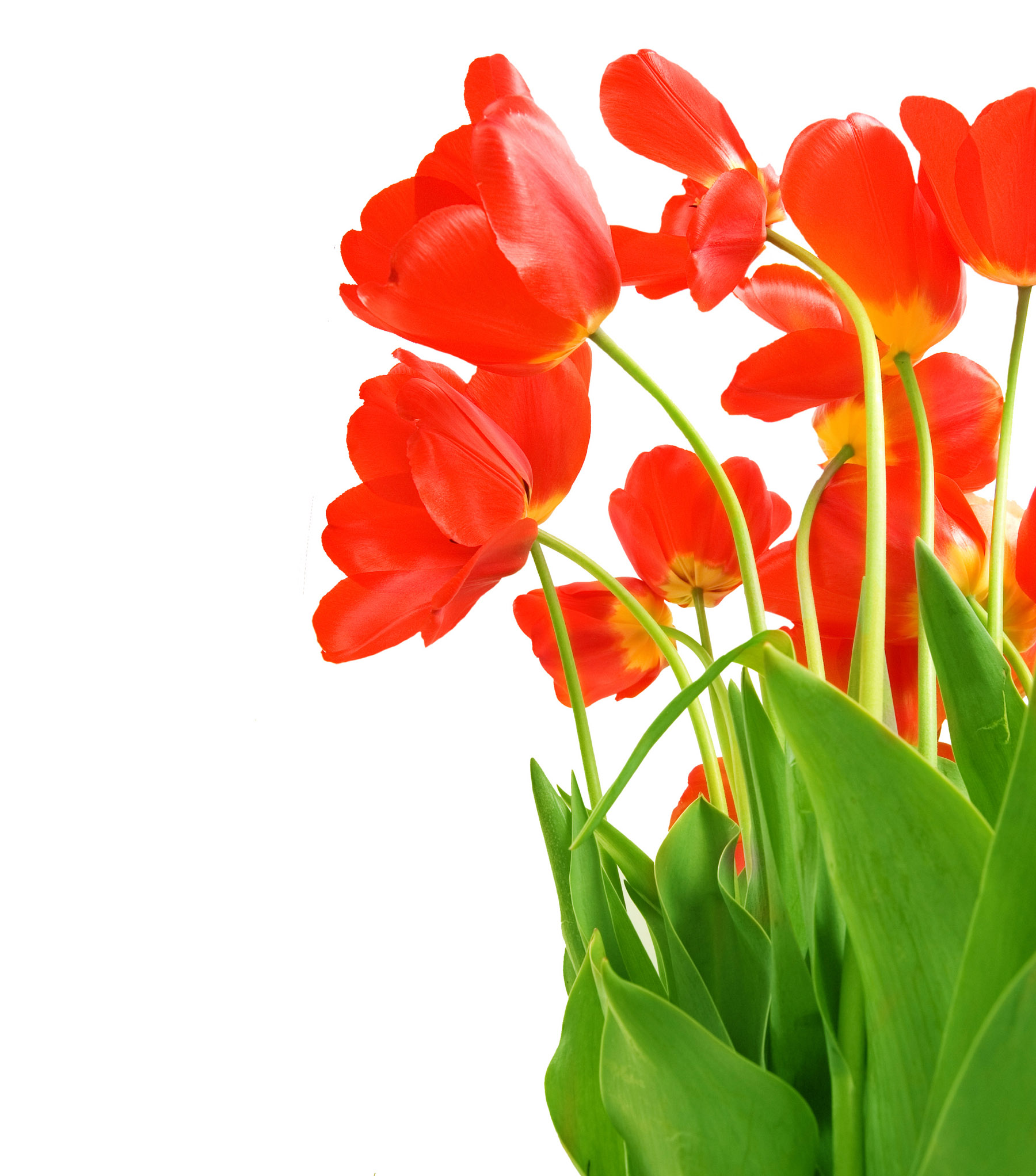 High-definition material tulip 15335