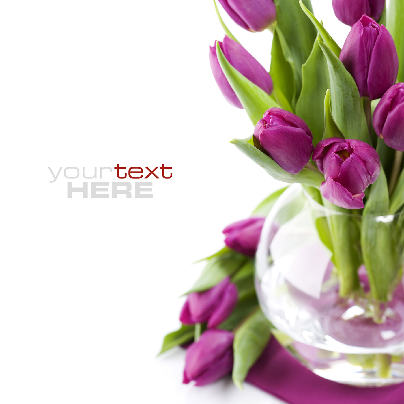 HD tulip photo 16059