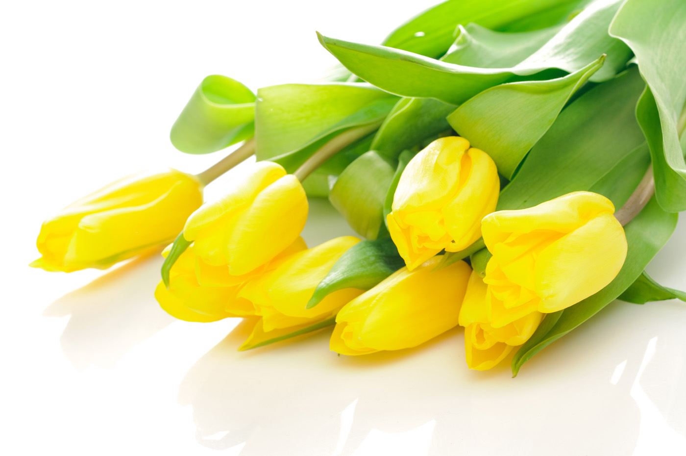 Yellow tulips 16472