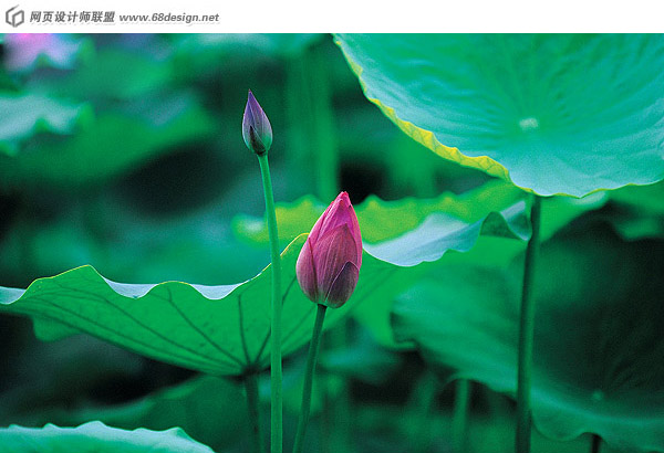 Used Lotus photo 12963